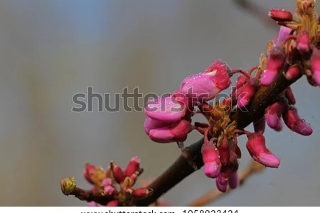 Beautiful flowers 2019 shocking pink flowers beautiful flowers shocking pink flowers various pictures of the most beautiful flowers can be found here find and download the prettiest flowers ornamental plants mightylinksfo