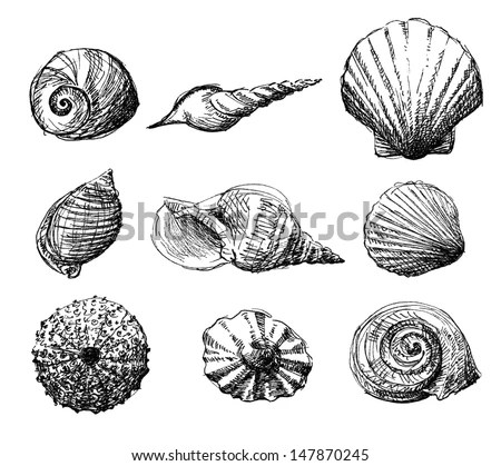 Cockle Shell Stock Images Royalty Free Images Amp Vectors