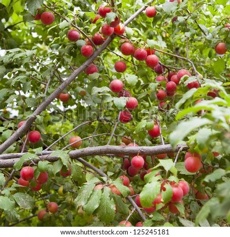 Hawthorn Tree Stock Images Royalty Free Images Amp Vectors Shutterstock