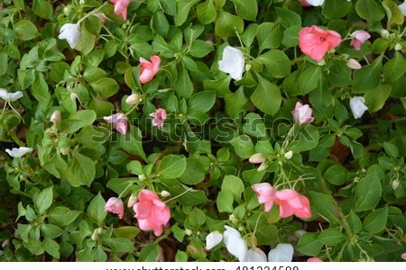 Flower shop near me small pink and white flowers flower shop small pink and white flowers the flowers are very beautiful here we provide a collections of various pictures of beautiful flowers charming mightylinksfo