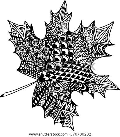 Vector Hand Drawn Maple Leaf Illustration Stock Vector
