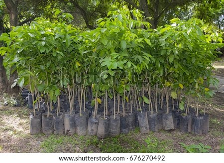 Reforestation Stock Images Royalty Free Images Amp Vectors