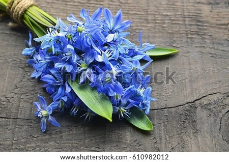 Scilla Stock Images Royalty Free Images Amp Vectors