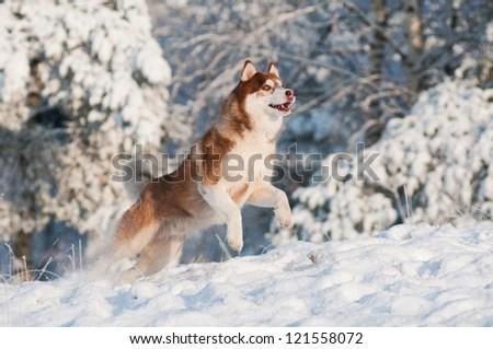Puppy Winter Stock Billeder Royaltyfri Billeder Og