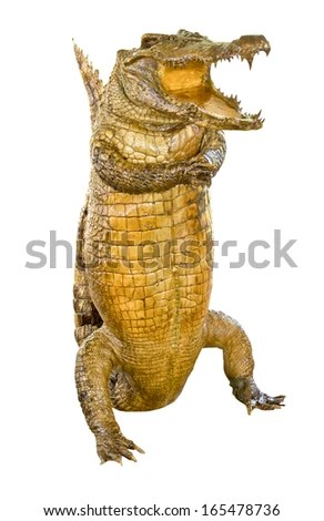Crocodile Fuck 87