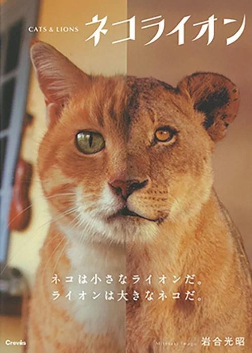 写真文庫 ネコライオン [ 岩合光昭 ]