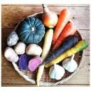 【ふるさと納税】オーガニックのお野菜セット(秋) 【野菜・セ