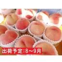 【ふるさと納税】8〜9月 大玉「白桃」約3kg・秀品7〜9玉