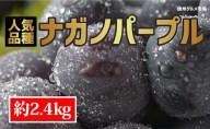 【ふるさと納税】☆先行予約≪人気の皮ごと≫ナガノパープル 約