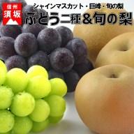 【ふるさと納税】☆先行予約【秋の味覚セット】人気のブドウ2種
