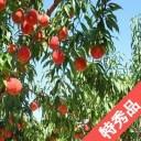 【ふるさと納税】[ 先行予約 ] 信州産 ( 川中島白桃 )