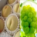 【ふるさと納税】0025-B-030 岡山県産白桃とシャイン
