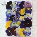 押し花 パンジーミックス25枚さまざまなカラー、サイズの押し花をミックスして詰め合わせました。飛騨のお花屋さんが手作りしています..