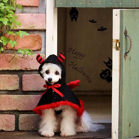 ハロウィーンに大人気ドッグウェア しましま角と羽の付いた かわいい小悪魔ケープ!
