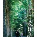 散り椿[Blu-ray] / 邦画