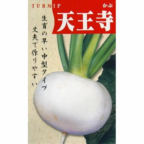 カブ 種 【天王寺】 小袋(約8ml) ( 種 野菜 野菜種子 野菜種 )