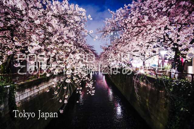 【日本の観光地ポストカード】「Tokyo Japan」目黒川の桜のハガキ pho