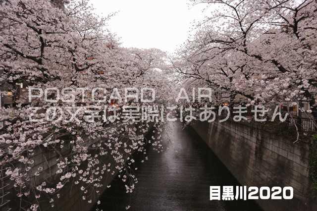 【伝えるポストカード】「目黒川2020」桜の葉書 ハガキ photo by MI