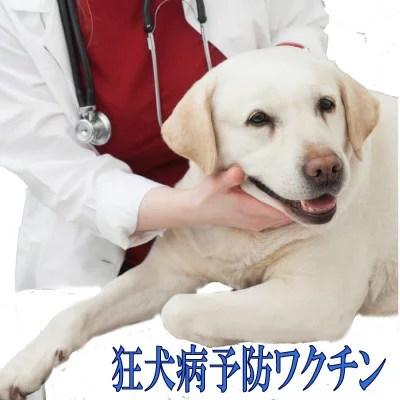狂犬病予防ワクチン 往診対応地域は[栃木県]足利市 [大阪府]大阪市 [京都府]京都市 [兵庫県]神戸市 [滋賀県]大津市ワクチン代金と往診料+診察料の合計金額です