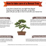 How To Take Care Of A Bonsai Tree Visual Ly