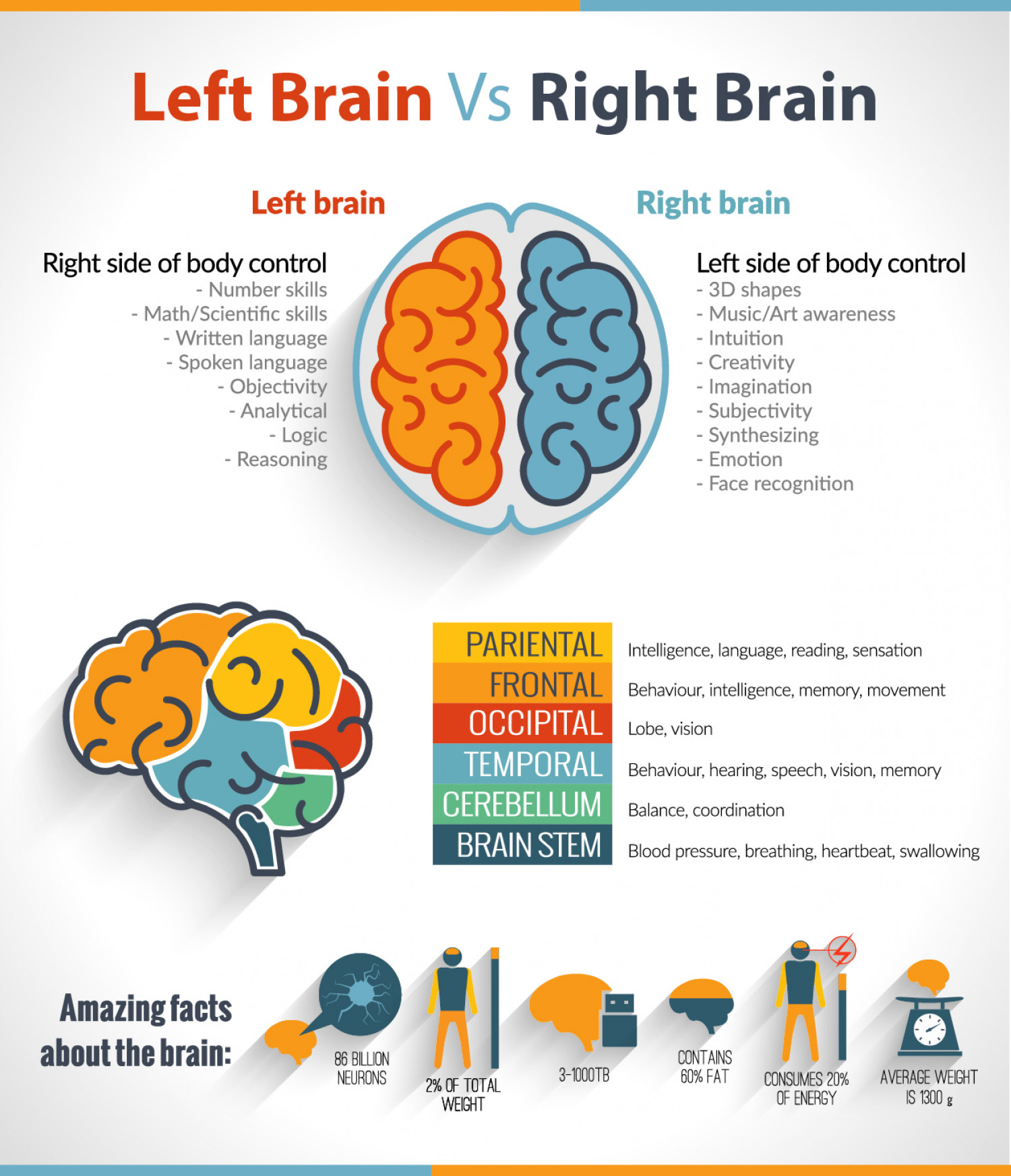 The Left Brain Vs Right Brain Confusion