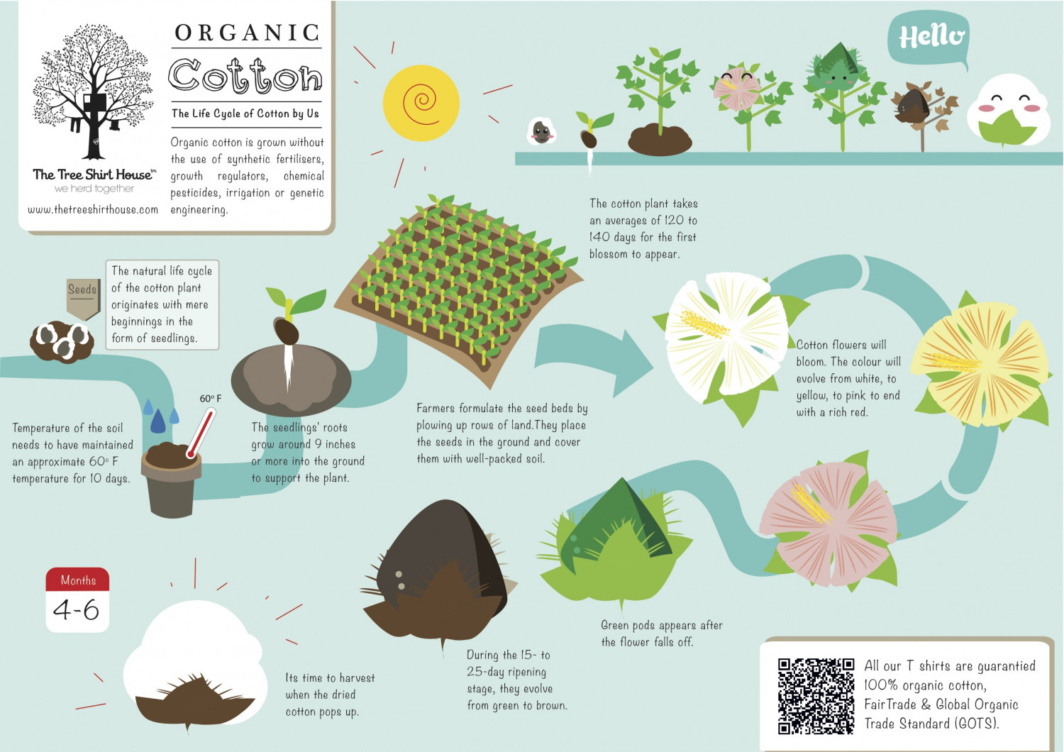 The Tsh S Organic Cotton S Lifecycle