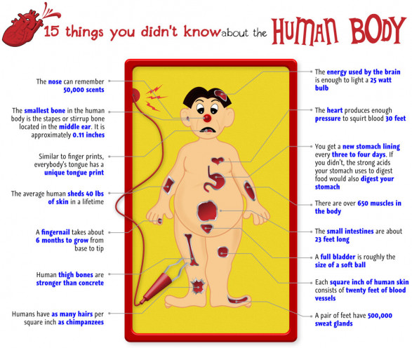 15 things you don't know about the human body