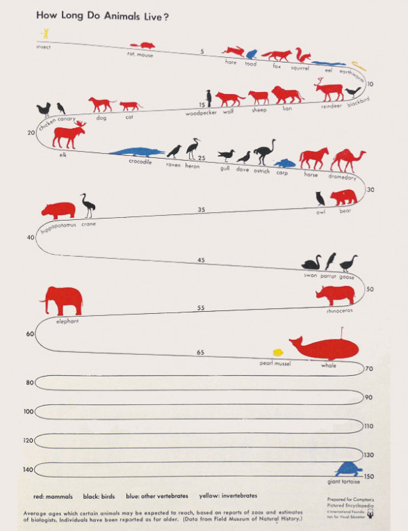 How Long Do Animals Live?