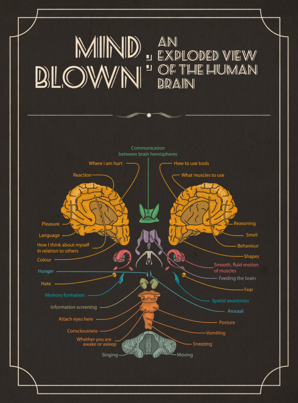 Mind Blown: An Exploded View of The Human Brain