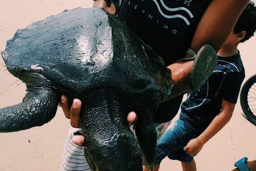 tartarugas cobertas de oleos foram encontradas em praias do litoral nordestino  foto instituto verdeluz divulgacao - ÓLEO NO MAR: praias de Cabo Branco e Tambaú são atingidas por vazamento de petróleo cru