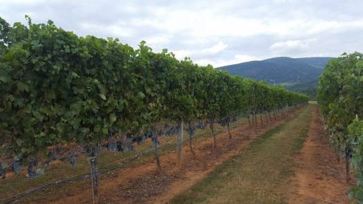 Virginia wine, winery tour, wine tasting, US travel road trips
