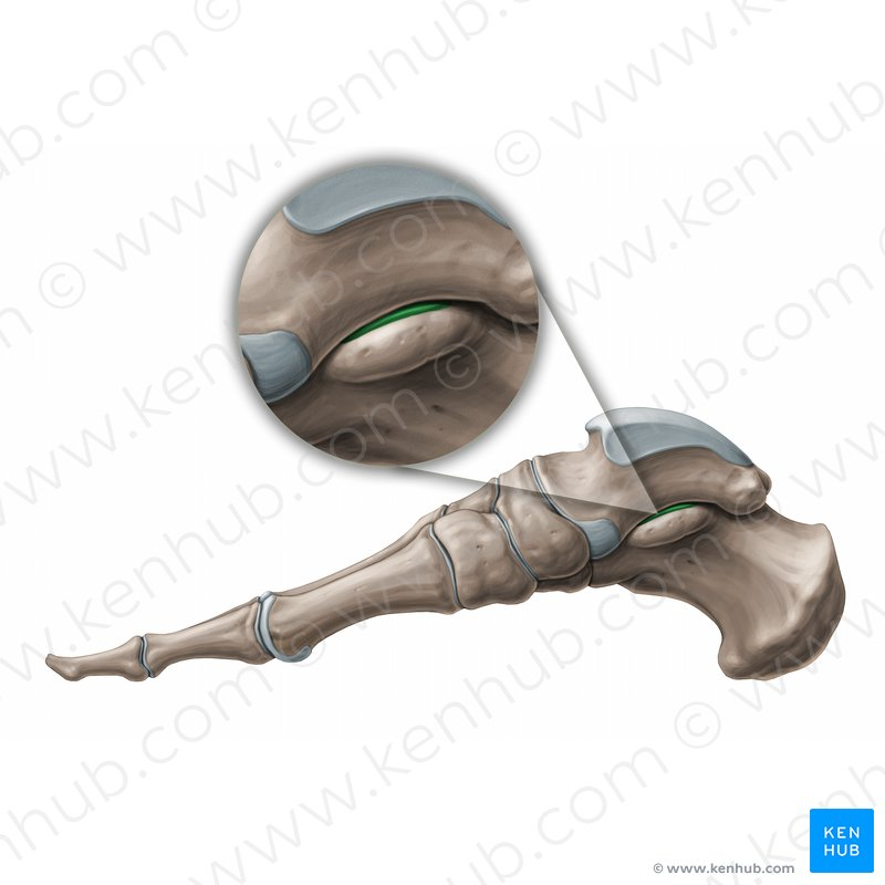 Shoulder Ligaments Posterior View Of The Only