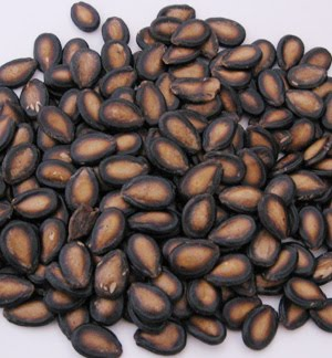 3000 year old seeds 5 Weird Things Found in Storage Units