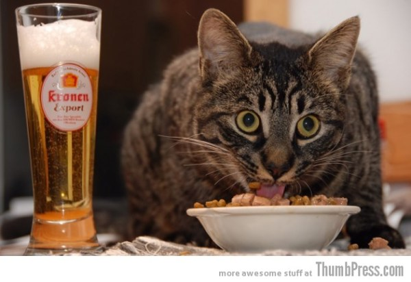 Catoxication: 15 Hilarious Pictures of Cats Drinking or Drunk