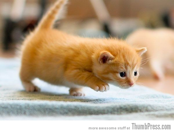 Awwwness Overloaded Cute And Cuddly Animals To Melt Your