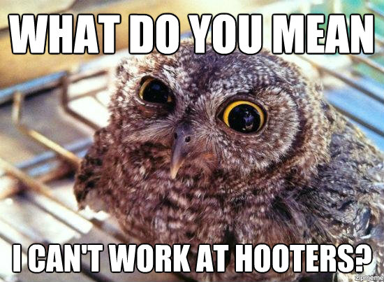 Hilariously Adorable Owl Memes 11