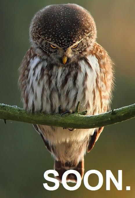 Hilariously Adorable Owl Memes 6