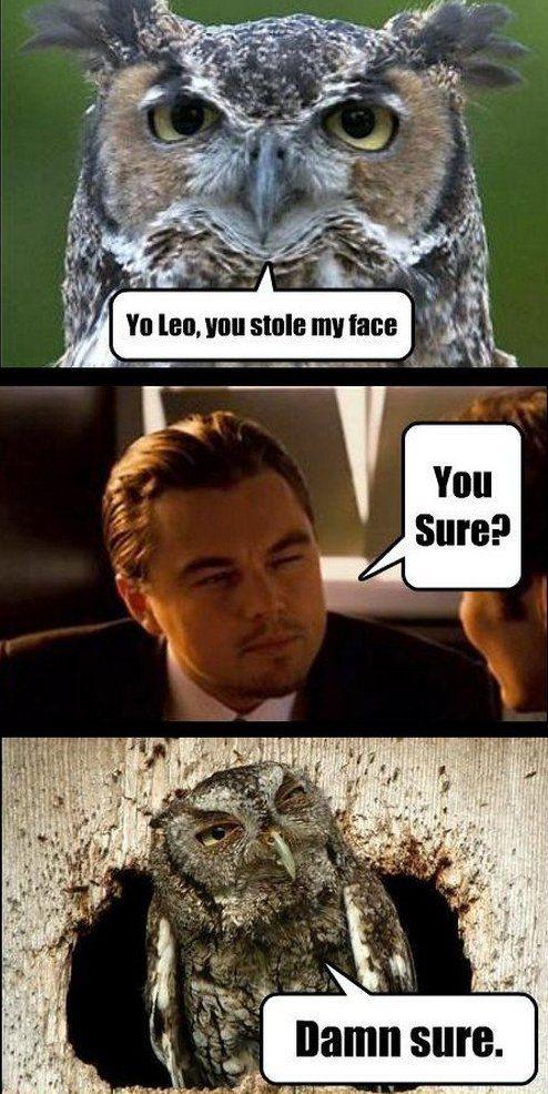 Hilariously Adorable Owl Memes 9