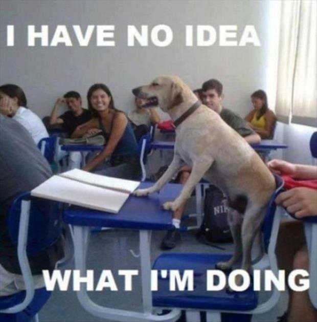 I have no idea what Im doing 10 The Very Best of I Have No Idea What Im Doing (20 Pics)