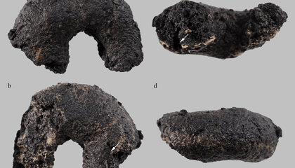 Ancient, Inedible 'Cheerios' Found in Austrian Archaeological Site