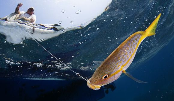 Climate change is causing oceans to warm, which in turn affects fish and fishers. Now, scientists are turning towards management strategies to protect species and the industry. (Claudio Contreras-Koob/International League of Conservation Photographers)