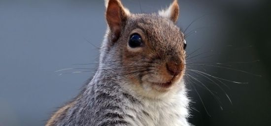 New Census Counted All Central Park's Squirrels