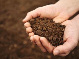 Image result for soil