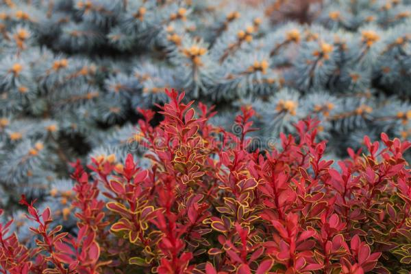 Запачканная предпосылка с красные листья орнаментальных ...