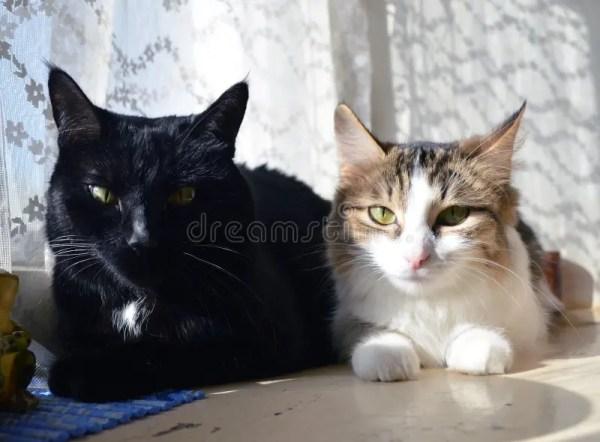 2 кота на окне в солнечном свете Стоковое Фото ...