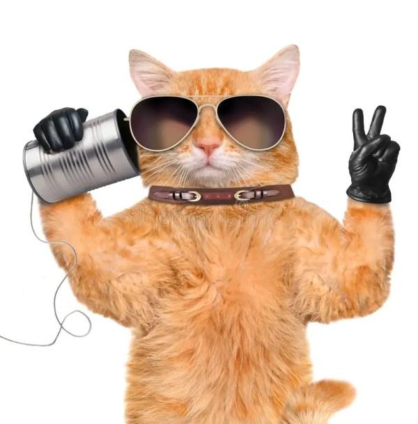 Кот с микрофоном стоковое фото. изображение насчитывающей ...