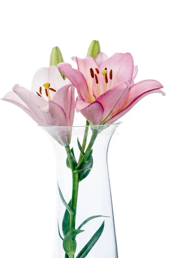 Лилии в стеклянной вазе стоковое изображение. изображение ...