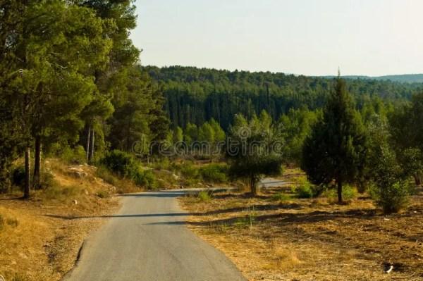 природа Израиля стоковое фото. изображение насчитывающей ...
