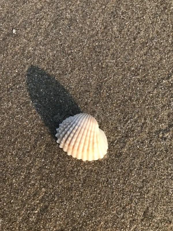 Раковина на пляже стоковое фото. изображение насчитывающей ...