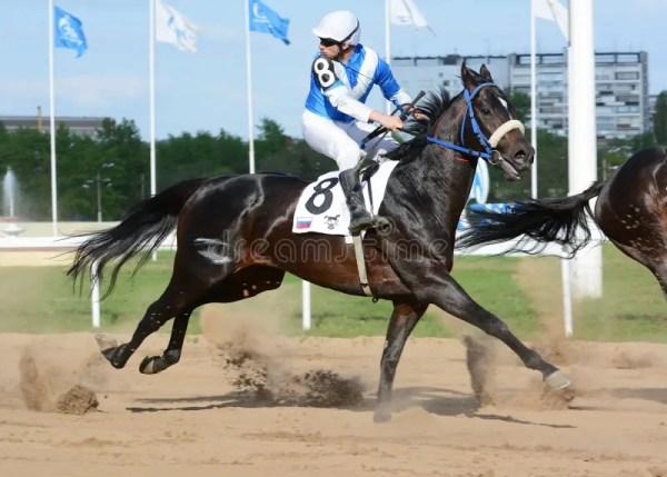Скаковые лошади племенника в движении в лошадиных скачках ...